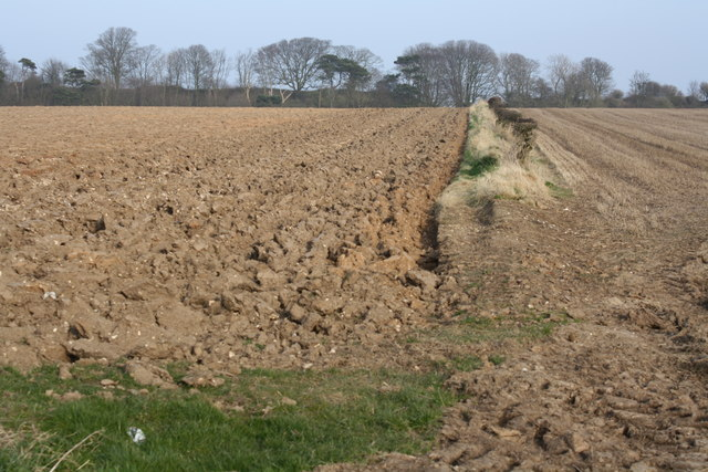 Hedgerow and Fields