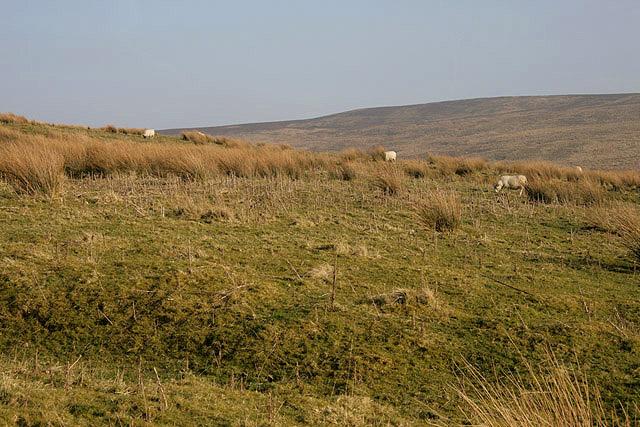 Rough grazing at Larriston Rig