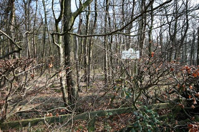 Redmond Wood