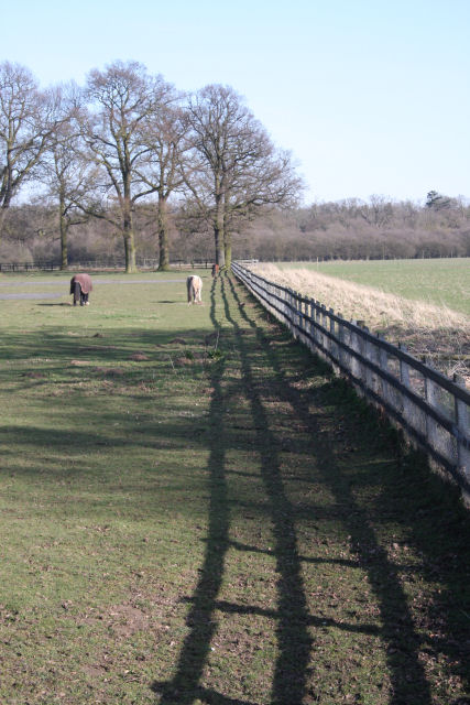Fence leading to Adkin's Wood