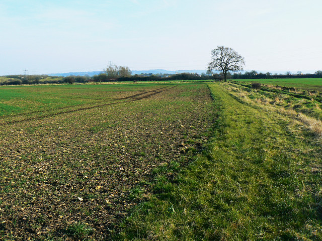 Field margin, near Hook Street
