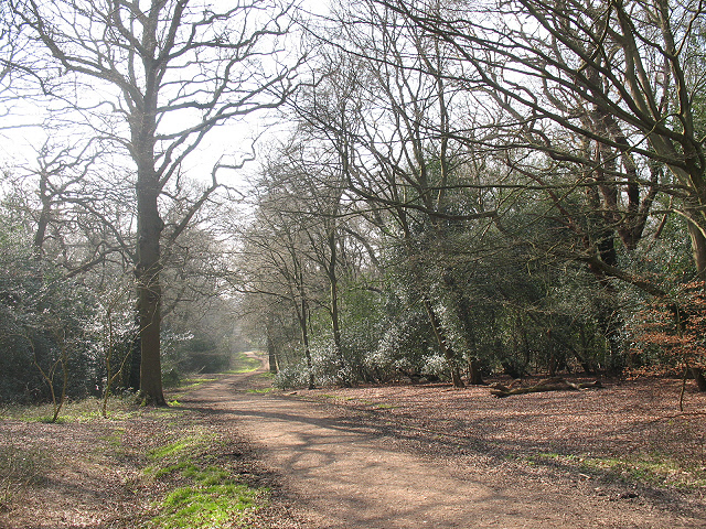 Epping Forest: northern end of the Green Ride