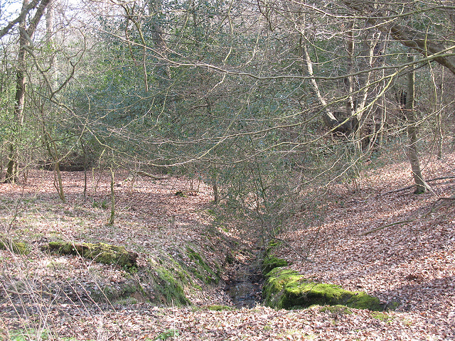 Epping Forest: minor stream
