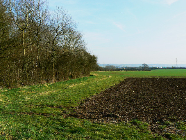Letterage Copse and a footpath, near Hook Street