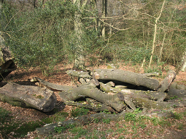 Epping Forest: log pile with fungi