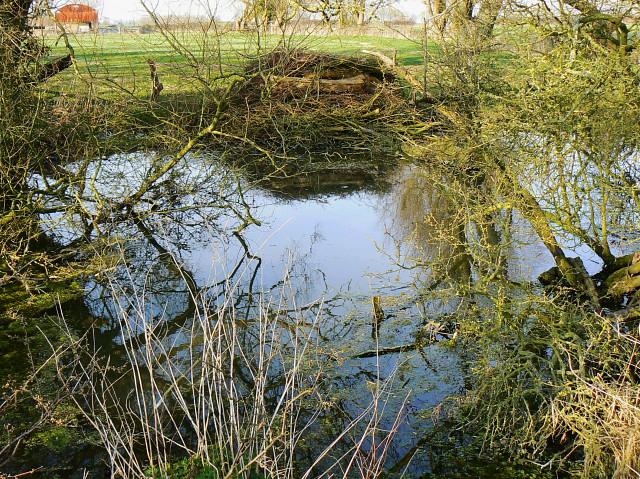 Pond near Hook Farm