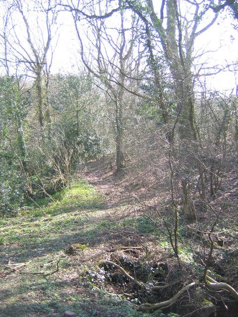 Public Footpath Through Kettles Wood, Frankley