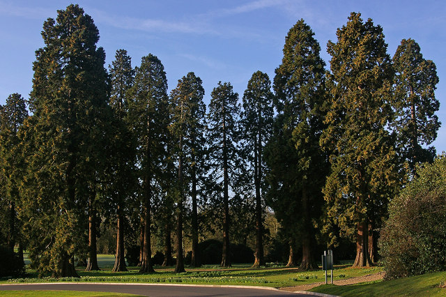 Redwoods, Royal Earlswood Park