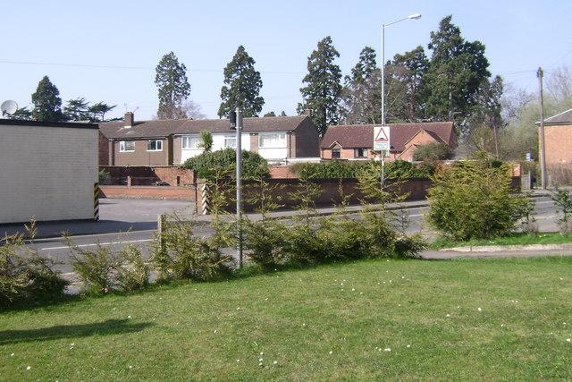 Big trees, Emscote, Warwick