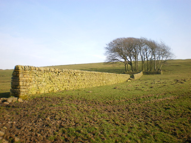 Wall, near Spen Brook