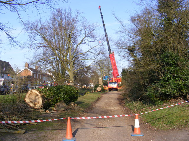 Tree Surgery in The Causeway, Peasenhall