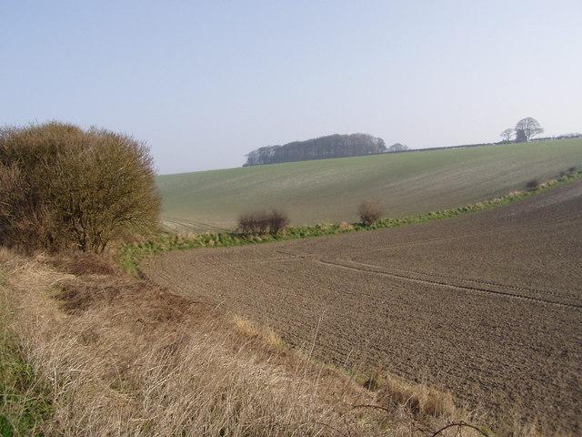 Hillfield near Bridlington