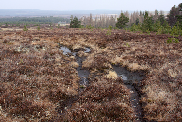 Boggy track near Reroppie