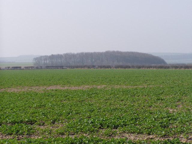 Looking Toward Whitedyke Hole Plantation