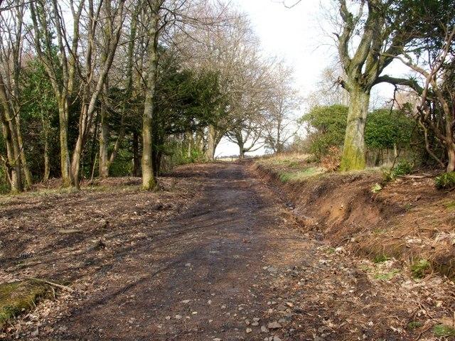 Woodland path near Overtoun House