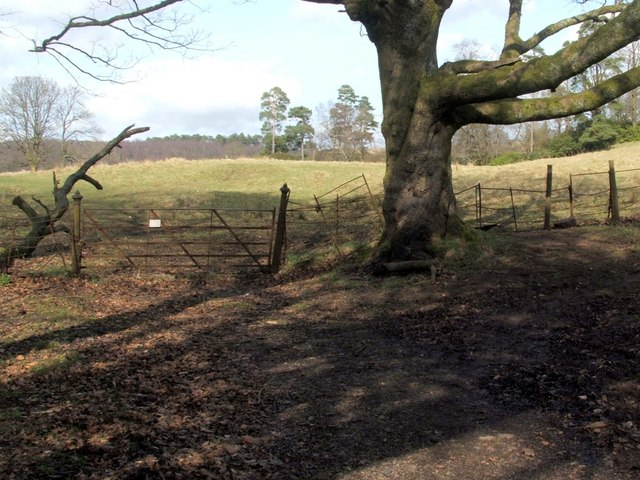 Gate leading from woods to grassland