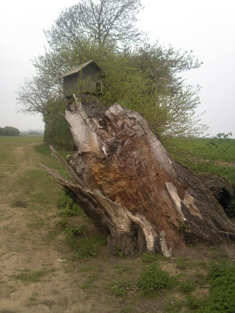 Owl nest box on Bubwith Ings