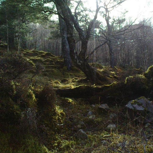 Mixed woodland, Glen Mallie