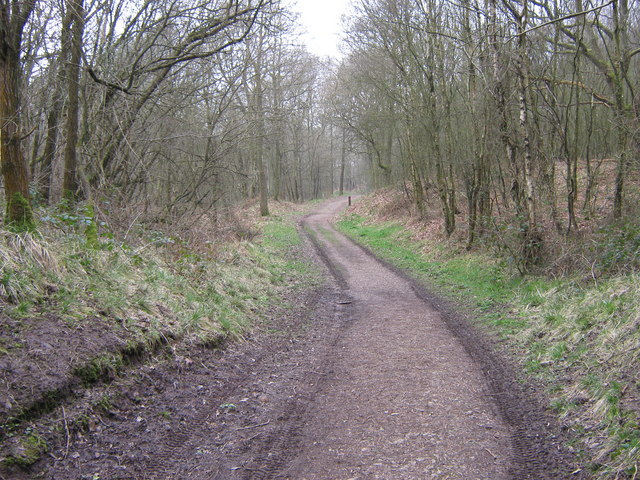 Track in Lower Lady Park Wood, Consall Nature Park
