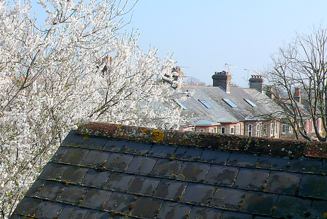 Treetops and Rooftops