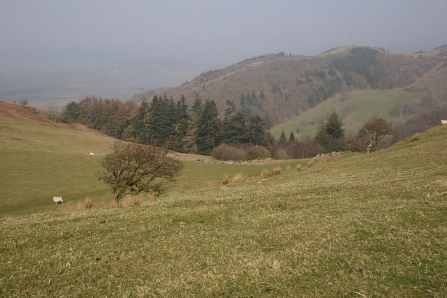 Pasture between Foel Fawr and Dynyn Hill