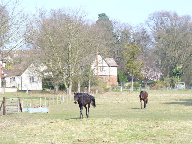 Paddock on Hook Hill Lane