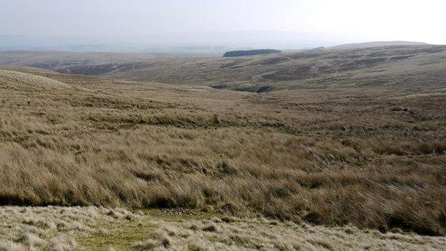 Boggy moorland by the upper Hazeltonrig Burn