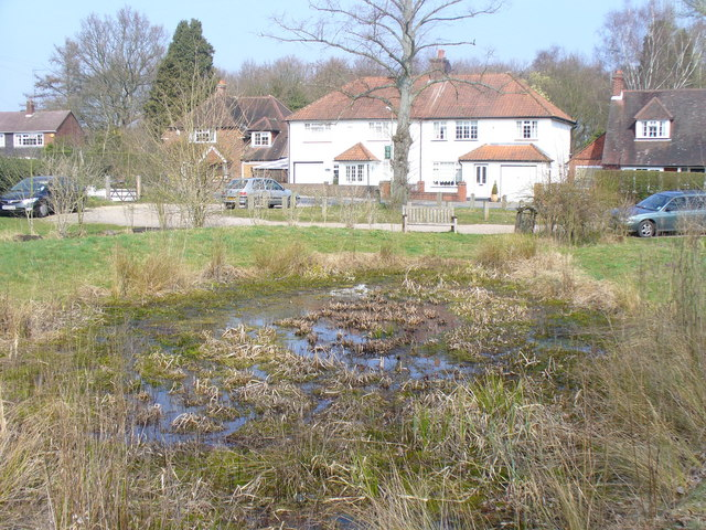 The Pond, Mayford Green