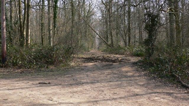 Track through Dirty Bridge Field