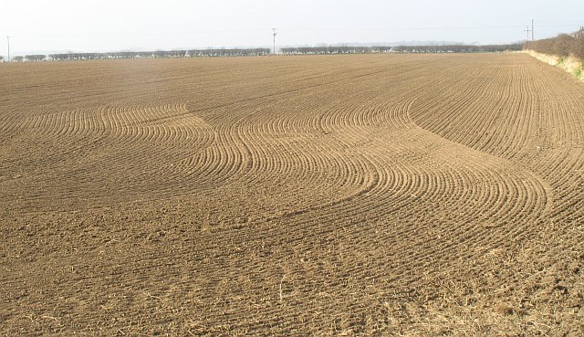 Newly sown field, Auldhame