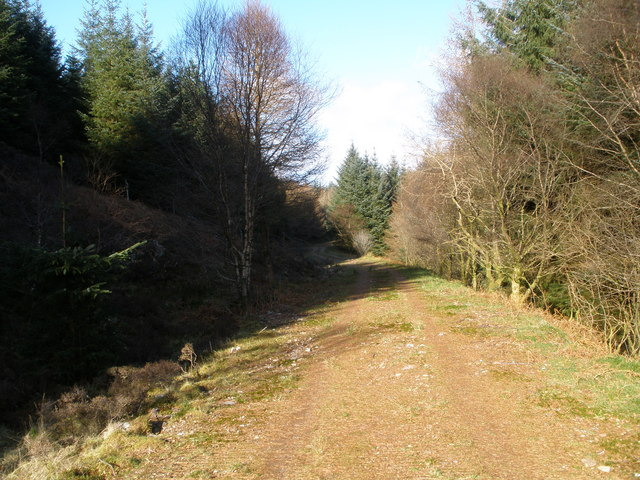 Forest track in Balliemore Forest