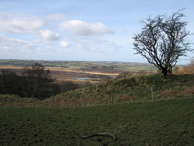 Enclosed grassland on Pen Llanerch