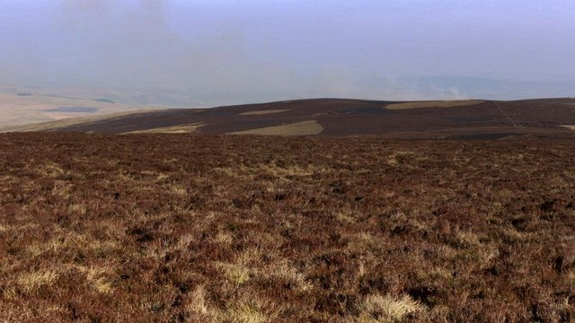 Heather moorland east of Wether Cairn