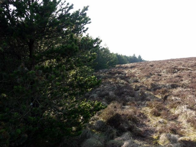 Edge of forest on Wholhope Hill