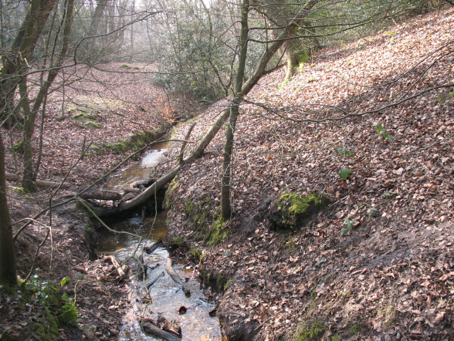 Epping Forest: stream above Debden Green