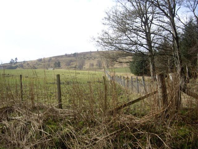 Woodland edge near Lowrie