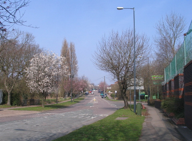 Blossom time in Sir Henry Parkes Road