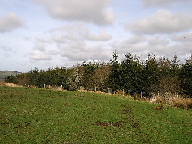 Woodland, Bwlchyddwyallt