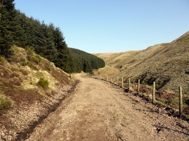 Forest track in the Allerhope Burn valley