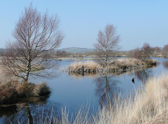 Cors Caron in March, near Tregaron, Ceredigion