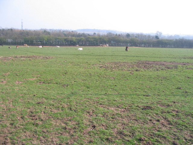 Grazing land, King's Hill Lane