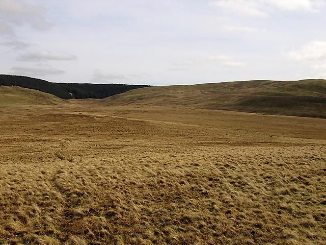 Upland bog
