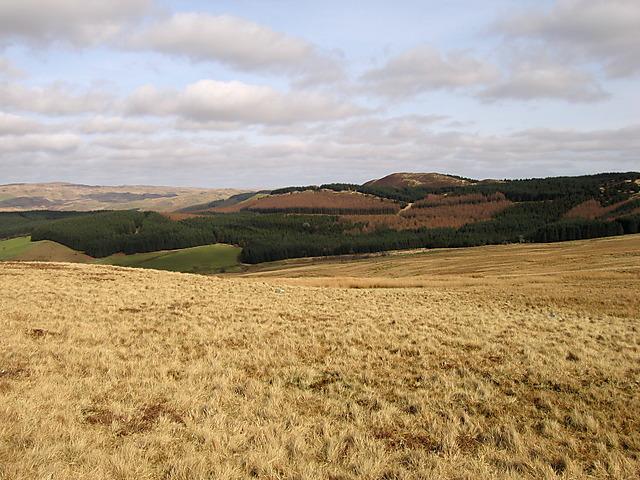 Moorland on Bryngwyn Bach