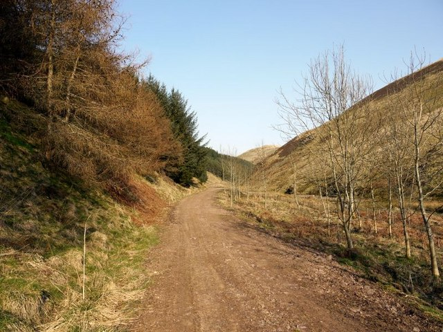 Forest track by the Allerhope Burn