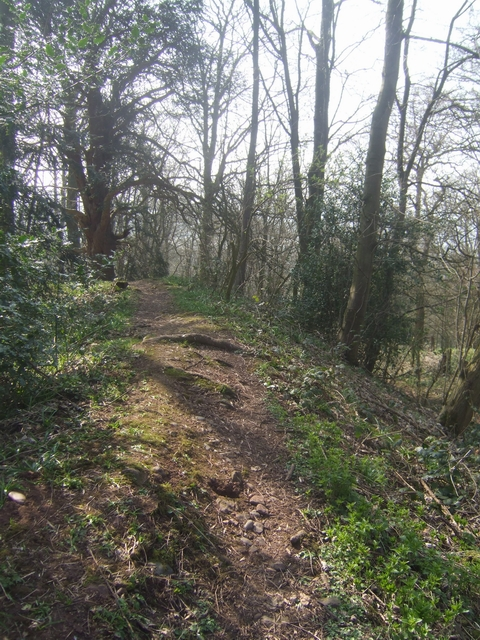 Wychbury Hill Fort - Southern Rampart