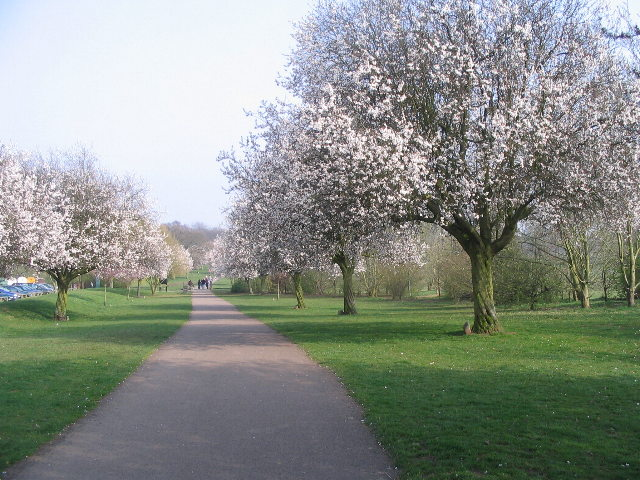 Blossom time, Memorial Park