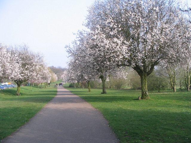 Blossom time, Memorial Park