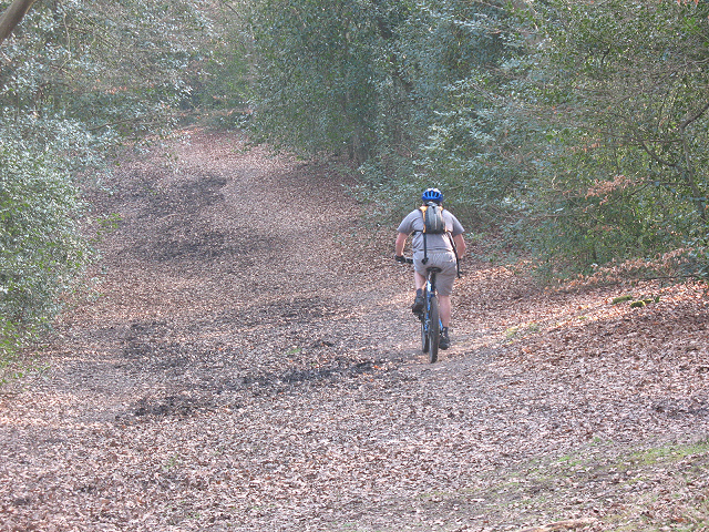 Epping Forest: cyclist