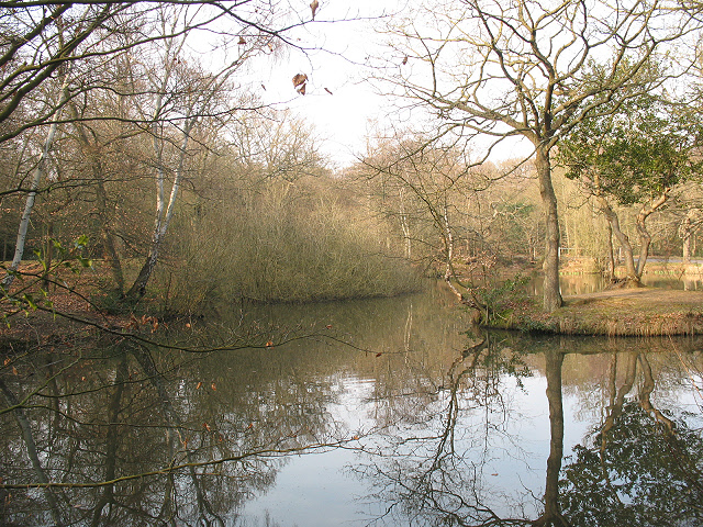 Epping Forest: southern pond at Strawberry Hill