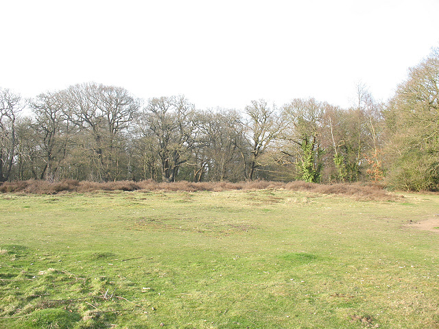 Epping Forest: clearing on Warren Hill
